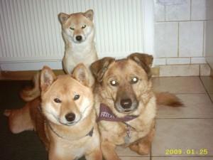 Roy,Fritzi und Niobe